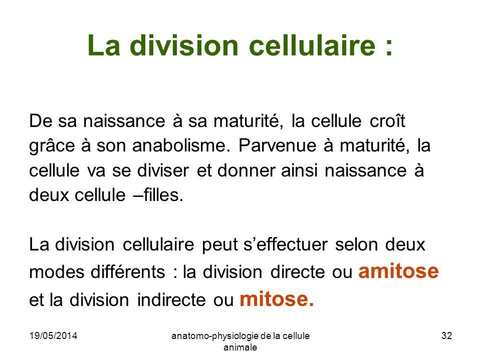19/05/2014anatomo-physiologie de la cellule animale 32 La division cellulaire : De sa naissance à sa maturité, la cellule croît grâce à son anabolisme
