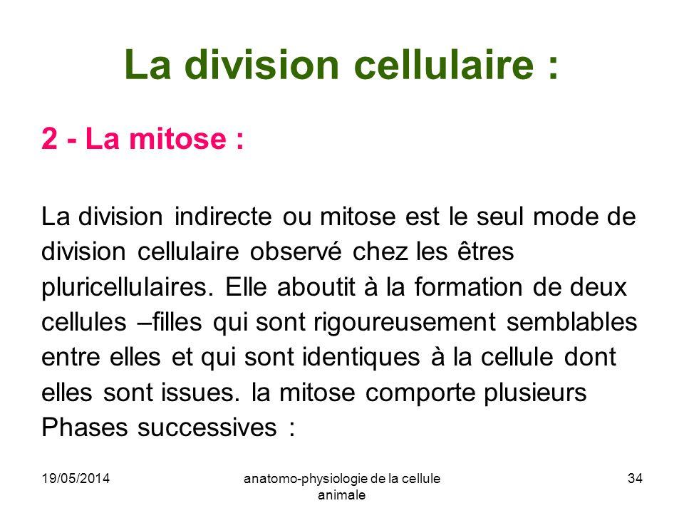 19/05/2014anatomo-physiologie de la cellule animale 34 La division cellulaire : 2 - La mitose : La division indirecte ou mitose est le seul mode de di