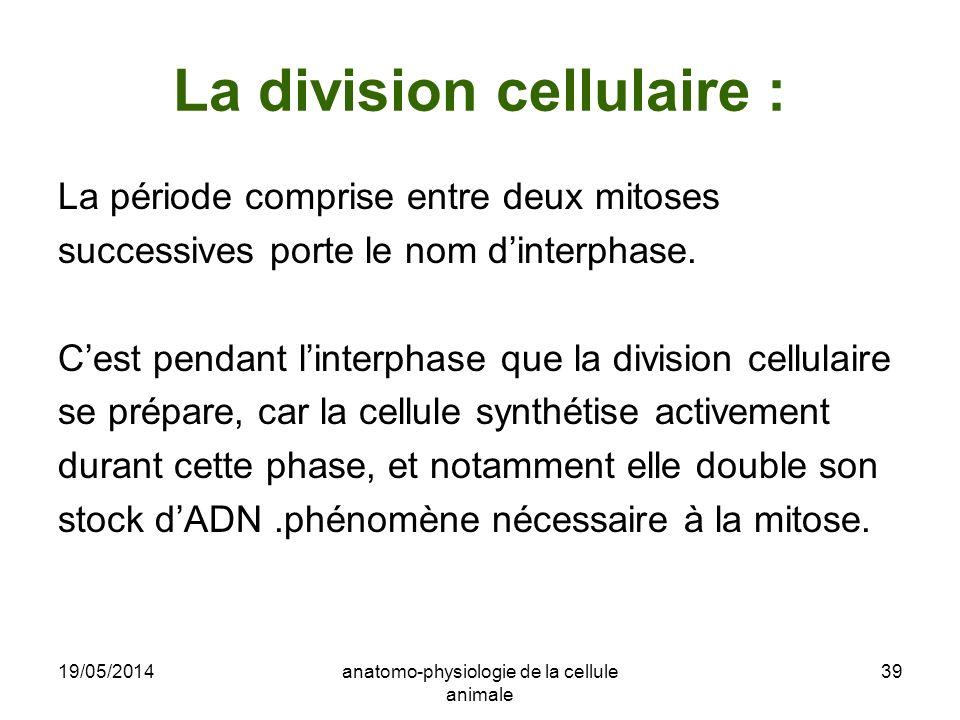 19/05/2014anatomo-physiologie de la cellule animale 39 La division cellulaire : La période comprise entre deux mitoses successives porte le nom dinter
