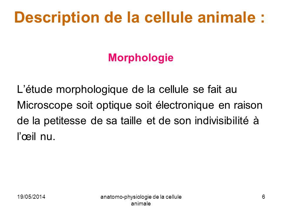 19/05/2014anatomo-physiologie de la cellule animale 6 Description de la cellule animale : Morphologie Létude morphologique de la cellule se fait au Mi