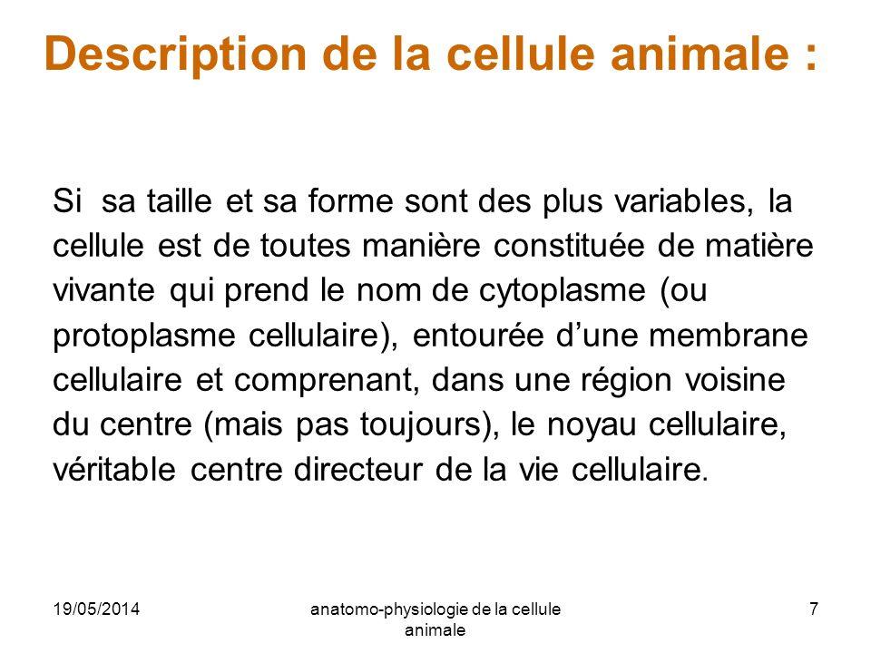 19/05/2014anatomo-physiologie de la cellule animale 7 Description de la cellule animale : Si sa taille et sa forme sont des plus variables, la cellule