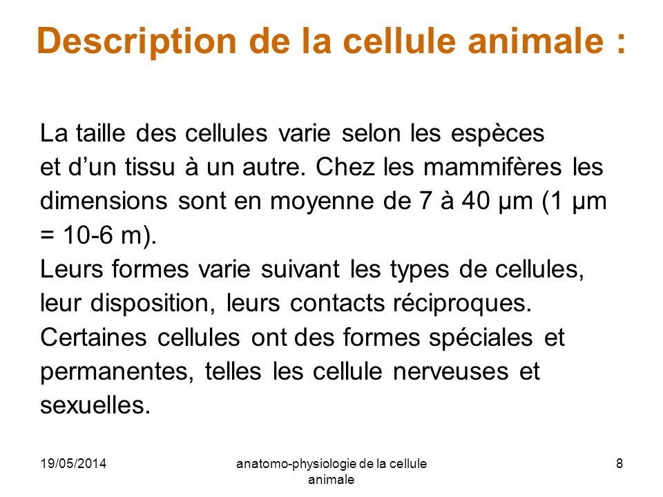 19/05/2014anatomo-physiologie de la cellule animale 8 Description de la cellule animale : La taille des cellules varie selon les espèces et dun tissu