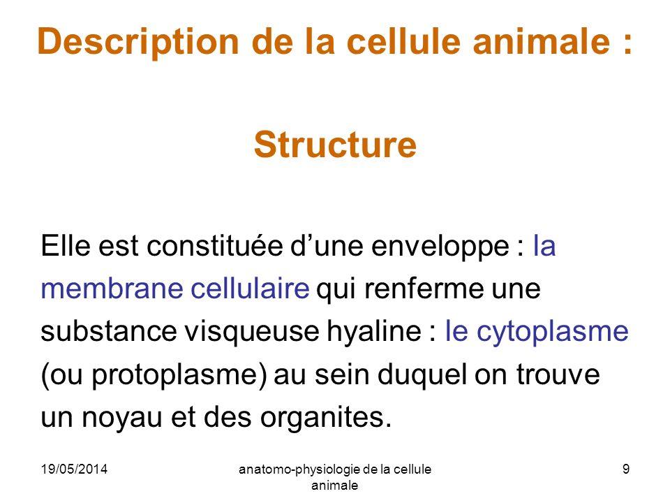 19/05/2014anatomo-physiologie de la cellule animale 9 Description de la cellule animale : Structure Elle est constituée dune enveloppe : la membrane c