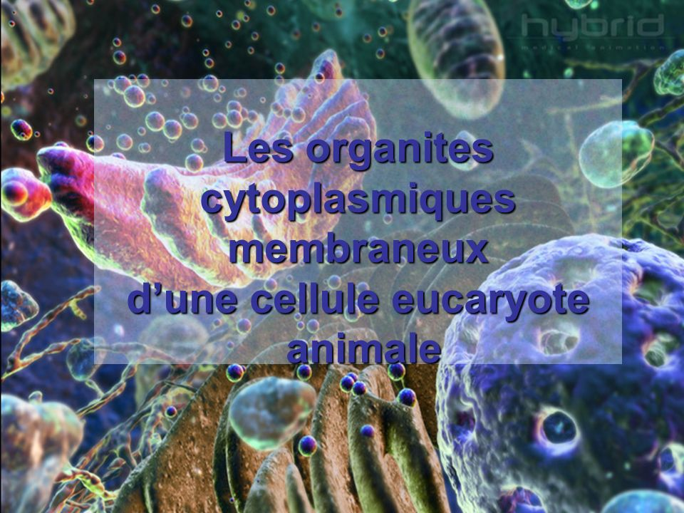 Les organites cytoplasmiques membraneux dune cellule eucaryote animale