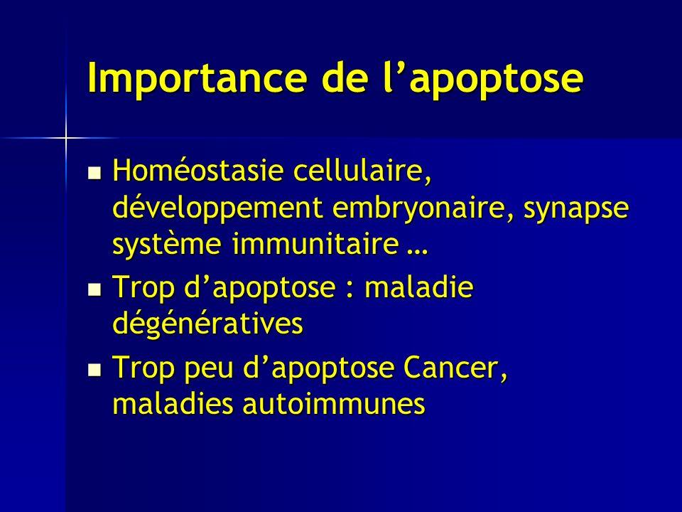 Importance de lapoptose Homéostasie cellulaire, développement embryonaire, synapse système immunitaire … Homéostasie cellulaire, développement embryonaire, synapse système immunitaire … Trop dapoptose : maladie dégénératives Trop dapoptose : maladie dégénératives Trop peu dapoptose Cancer, maladies autoimmunes Trop peu dapoptose Cancer, maladies autoimmunes