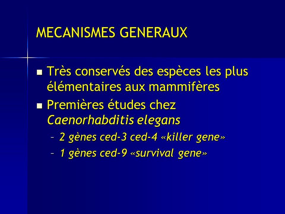 MECANISMES GENERAUX Très conservés des espèces les plus élémentaires aux mammifères Très conservés des espèces les plus élémentaires aux mammifères Premières études chez Caenorhabditis elegans Premières études chez Caenorhabditis elegans –2 gènes ced-3 ced-4 «killer gene» –2 gènes ced-3 ced-4 «killer gene» –1 gènes ced-9 «survival gene»