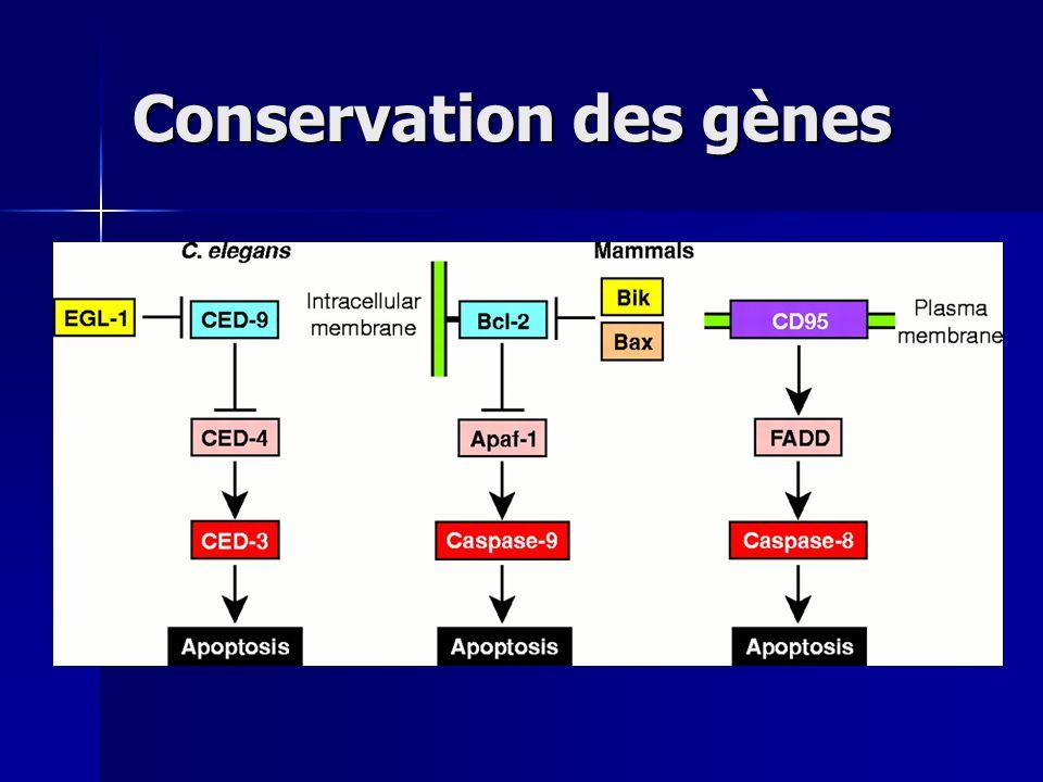 Conservation des gènes