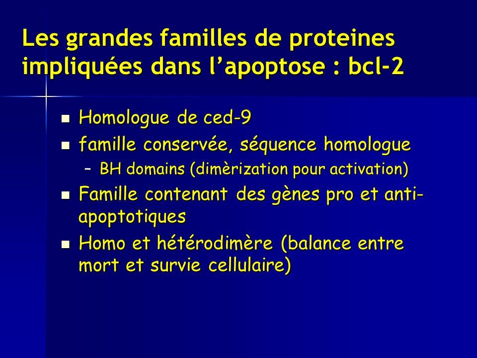 Les grandes familles de proteines impliquées dans lapoptose : bcl-2 Homologue de ced-9 Homologue de ced-9 famille conservée, séquence homologue famille conservée, séquence homologue –BH domains (dimèrization pour activation) Famille contenant des gènes pro et anti- apoptotiques Famille contenant des gènes pro et anti- apoptotiques Homo et hétérodimère (balance entre mort et survie cellulaire) Homo et hétérodimère (balance entre mort et survie cellulaire)