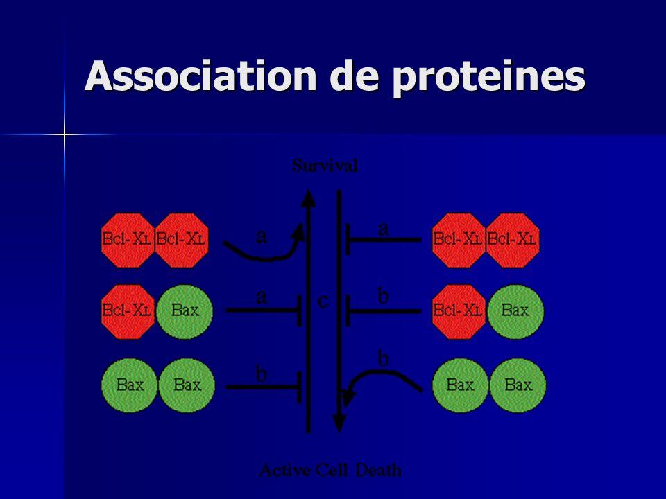 Association de proteines