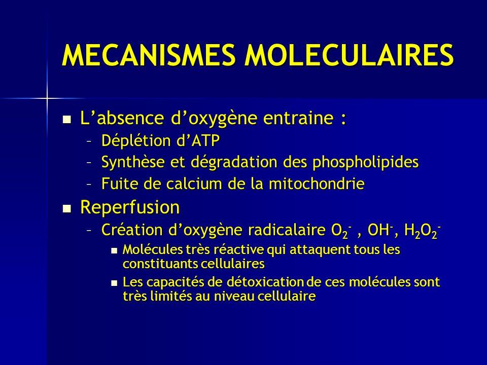 MECANISMES MOLECULAIRES Labsence doxygène entraine : Labsence doxygène entraine : –Déplétion dATP –Synthèse et dégradation des phospholipides –Fuite de calcium de la mitochondrie Reperfusion Reperfusion –Création doxygène radicalaire O 2 -, OH -, H 2 O 2 - Molécules très réactive qui attaquent tous les constituants cellulaires Molécules très réactive qui attaquent tous les constituants cellulaires Les capacités de détoxication de ces molécules sont très limités au niveau cellulaire Les capacités de détoxication de ces molécules sont très limités au niveau cellulaire