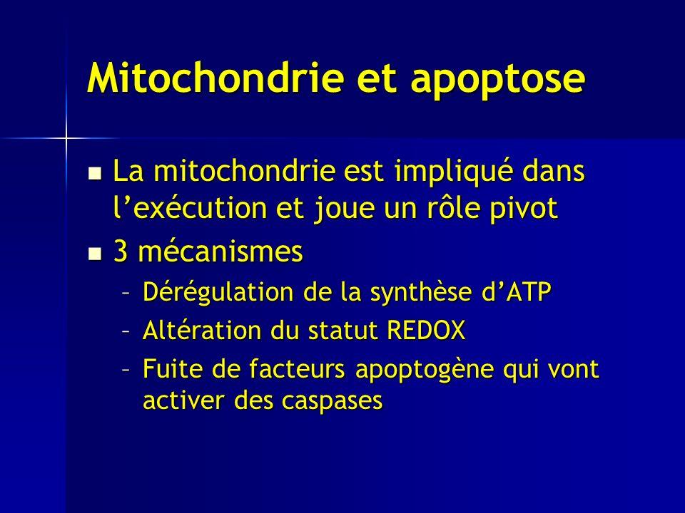 Mitochondrie et apoptose La mitochondrie est impliqué dans lexécution et joue un rôle pivot La mitochondrie est impliqué dans lexécution et joue un rôle pivot 3 mécanismes 3 mécanismes –Dérégulation de la synthèse dATP –Altération du statut REDOX –Fuite de facteurs apoptogène qui vont activer des caspases