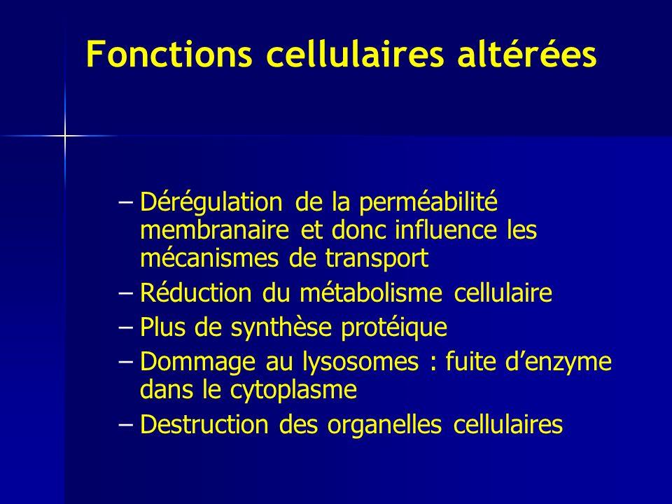 Fonctions cellulaires altérées – –Dérégulation de la perméabilité membranaire et donc influence les mécanismes de transport – –Réduction du métabolisme cellulaire – –Plus de synthèse protéique – –Dommage au lysosomes : fuite denzyme dans le cytoplasme – –Destruction des organelles cellulaires