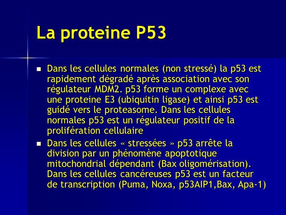 La proteine P53 Dans les cellules normales (non stressé) la p53 est rapidement dégradé après association avec son régulateur MDM2.