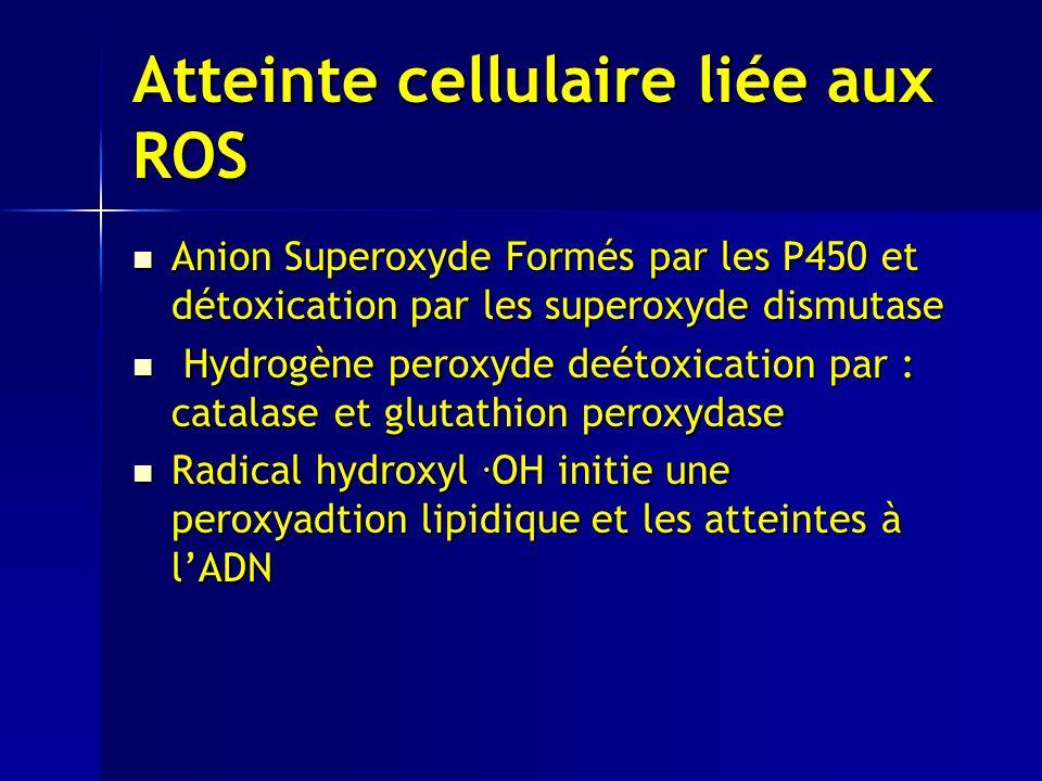 Atteinte cellulaire liée aux ROS Anion Superoxyde Formés par les P450 et détoxication par les superoxyde dismutase Anion Superoxyde Formés par les P450 et détoxication par les superoxyde dismutase Hydrogène peroxyde deétoxication par : catalase et glutathion peroxydase Hydrogène peroxyde deétoxication par : catalase et glutathion peroxydase Radical hydroxyl.