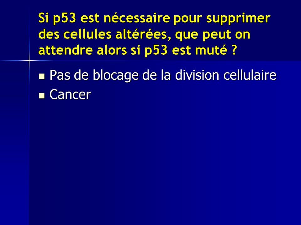 Si p53 est nécessaire pour supprimer des cellules altérées, que peut on attendre alors si p53 est muté .