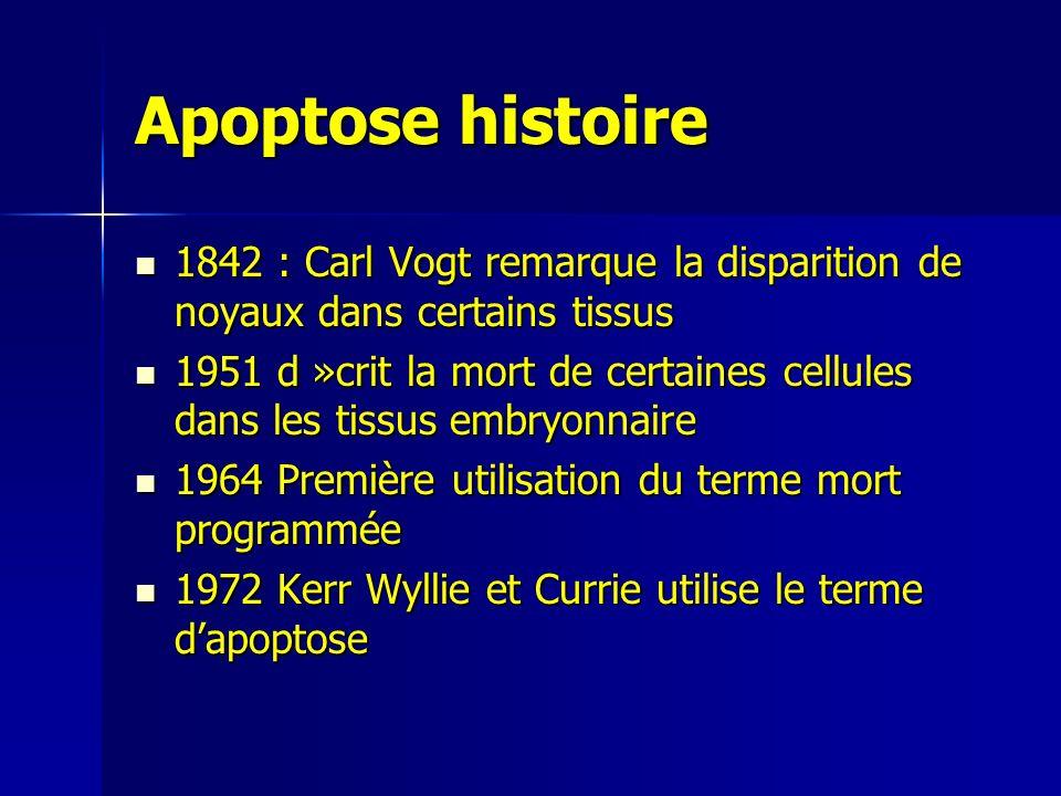 Apoptose histoire 1842 : Carl Vogt remarque la disparition de noyaux dans certains tissus 1842 : Carl Vogt remarque la disparition de noyaux dans certains tissus 1951 d »crit la mort de certaines cellules dans les tissus embryonnaire 1951 d »crit la mort de certaines cellules dans les tissus embryonnaire 1964 Première utilisation du terme mort programmée 1964 Première utilisation du terme mort programmée 1972 Kerr Wyllie et Currie utilise le terme dapoptose 1972 Kerr Wyllie et Currie utilise le terme dapoptose
