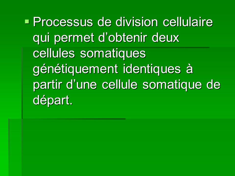 Processus de division cellulaire qui permet dobtenir deux cellules somatiques génétiquement identiques à partir dune cellule somatique de départ. Proc