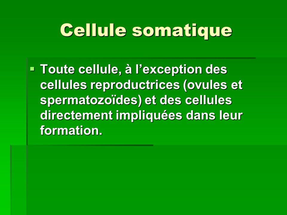Cellules diploïdes Sont des cellules dont leurs chromosomes se retrouvent en paire.