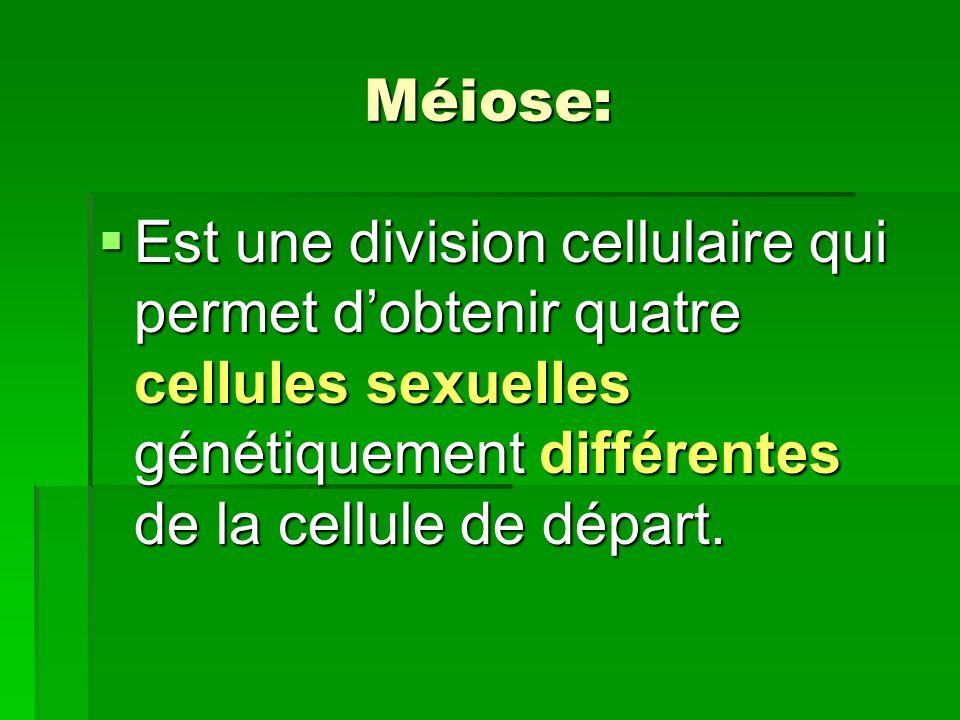 Méiose: Est une division cellulaire qui permet dobtenir quatre cellules sexuelles génétiquement différentes de la cellule de départ. Est une division
