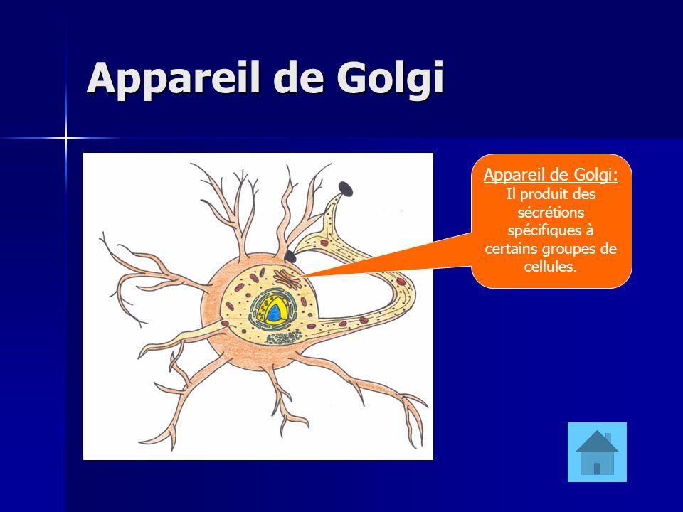 Appareil de Golgi Appareil de Golgi: Il produit des sécrétions spécifiques à certains groupes de cellules.