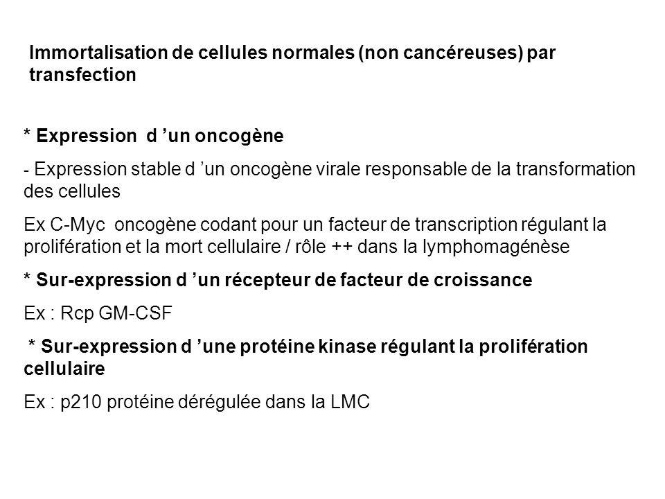 * Expression d un oncogène - Expression stable d un oncogène virale responsable de la transformation des cellules Ex C-Myc oncogène codant pour un facteur de transcription régulant la prolifération et la mort cellulaire / rôle ++ dans la lymphomagénèse * Sur-expression d un récepteur de facteur de croissance Ex : Rcp GM-CSF * Sur-expression d une protéine kinase régulant la prolifération cellulaire Ex : p210 protéine dérégulée dans la LMC Immortalisation de cellules normales (non cancéreuses) par transfection