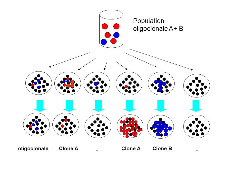 Population oligoclonale A+ B oligoclonaleClone A - Clone B -