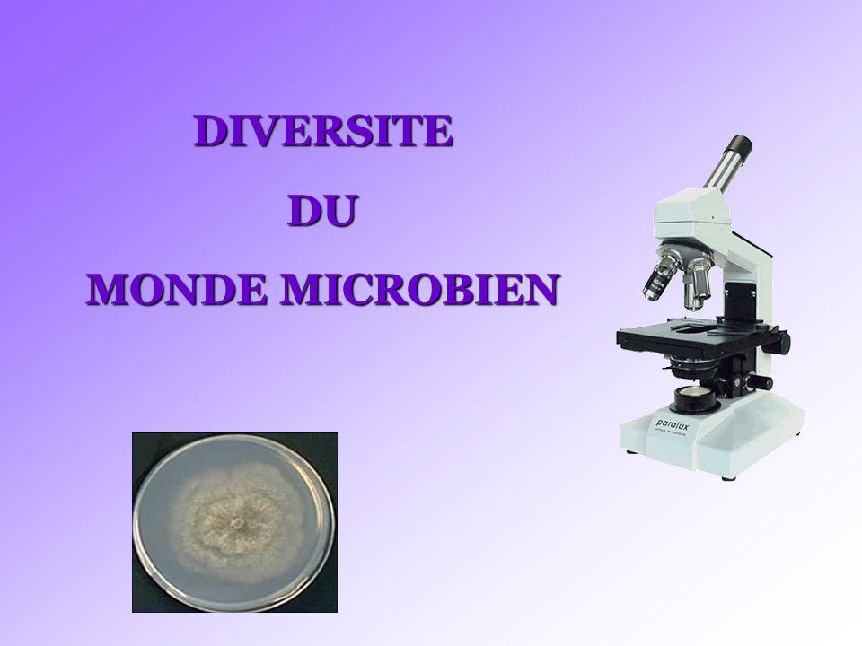 DIVERSITEDU MONDE MICROBIEN