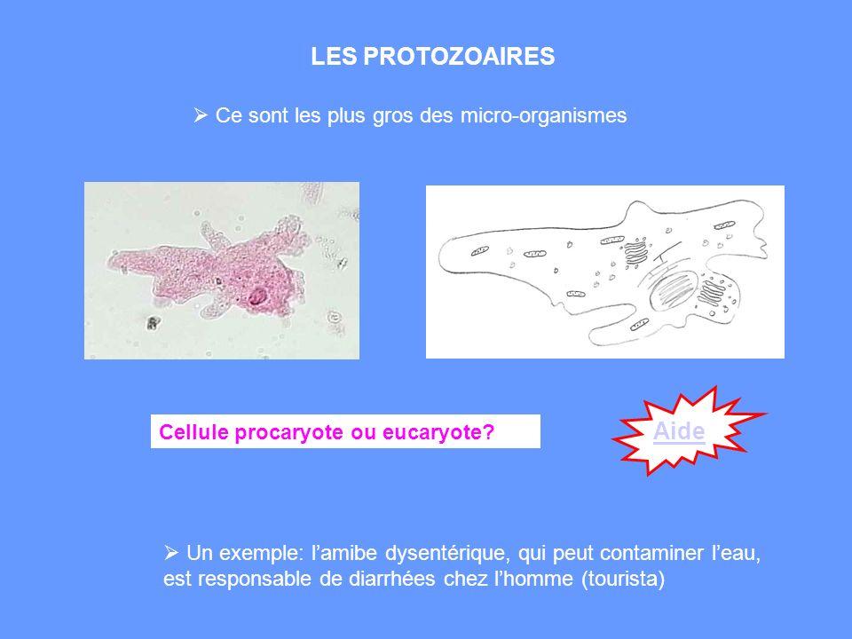 LES PROTOZOAIRES Un exemple: lamibe dysentérique, qui peut contaminer leau, est responsable de diarrhées chez lhomme (tourista) Ce sont les plus gros