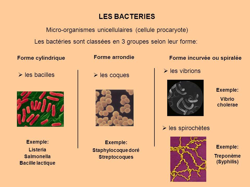 LES BACTERIES Les bactéries sont classées en 3 groupes selon leur forme: Forme incurvée ou spiralée les vibrions les spirochètes Forme cylindrique les