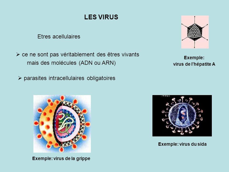 LES VIRUS ce ne sont pas véritablement des êtres vivants mais des molécules (ADN ou ARN) Etres acellulaires parasites intracellulaires obligatoires Ex