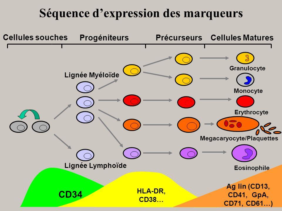 Séquence dexpression des marqueurs Cellules MaturesPrécurseursProgéniteurs Lignée Myéloïde Lignée Lymphoïde Megacaryocyte/Plaquettes Monocyte Erythroc