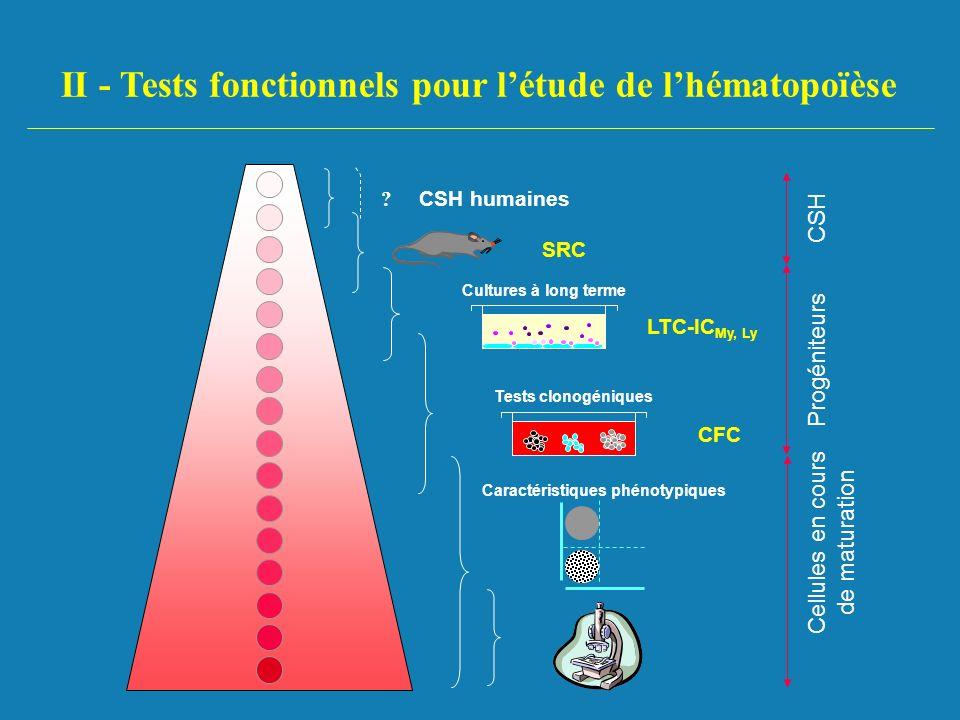 II - Tests fonctionnels pour létude de lhématopoïèse CSH humaines ? CSH SRC Cultures à long terme Progéniteurs LTC-IC My, Ly Tests clonogéniques CFC C