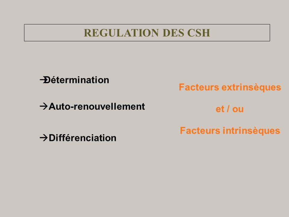 REGULATION DES CSH Auto-renouvellement Détermination Différenciation Facteurs extrinsèques Facteurs intrinsèques et / ou
