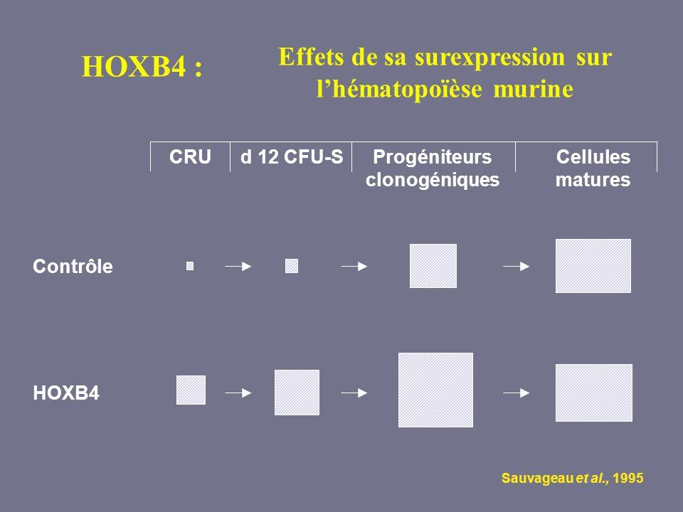 HOXB4 Contrôle Progéniteurs clonogéniques d 12 CFU-SCellules matures CRU Sauvageau et al., 1995 Effets de sa surexpression sur lhématopoïèse murine HO