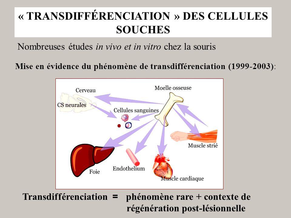 « TRANSDIFFÉRENCIATION » DES CELLULES SOUCHES Nombreuses études in vivo et in vitro chez la souris Transdifférenciation = phénomène rare + contexte de