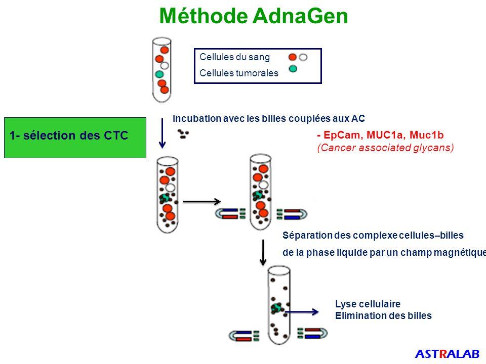 Cellules du sang Cellules tumorales Incubation avec les billes couplées aux AC Séparation des complexe cellules–billes de la phase liquide par un champ magnétique Lyse cellulaire Elimination des billes 1- sélection des CTC - EpCam, MUC1a, Muc1b (Cancer associated glycans) Méthode AdnaGen ASTRALAB