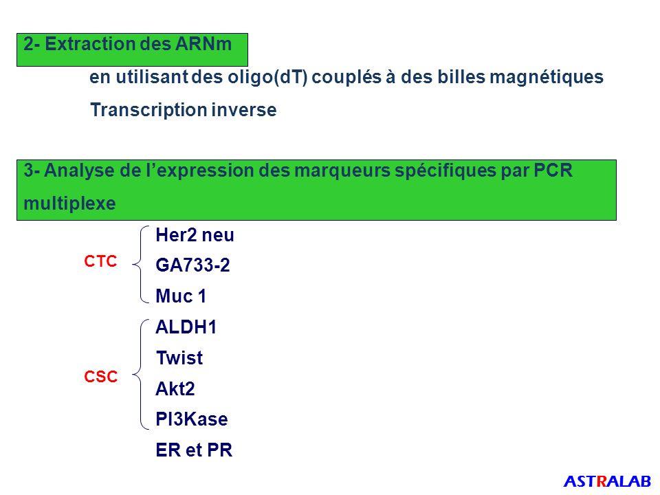 2- Extraction des ARNm en utilisant des oligo(dT) couplés à des billes magnétiques Transcription inverse 3- Analyse de lexpression des marqueurs spécifiques par PCR multiplexe Her2 neu GA733-2 Muc 1 ALDH1 Twist Akt2 PI3Kase ER et PR CSC ASTRALAB CTC