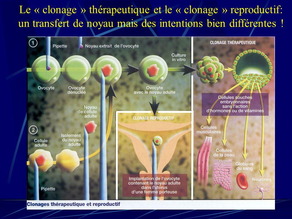 Le « clonage » thérapeutique et le « clonage » reproductif: un transfert de noyau mais des intentions bien différentes !