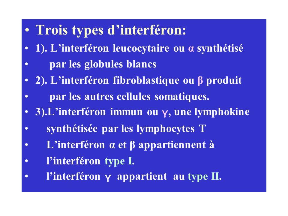 Trois types dinterféron: 1). Linterféron leucocytaire ou α synthétisé par les globules blancs 2). Linterféron fibroblastique ou β produit par les autr