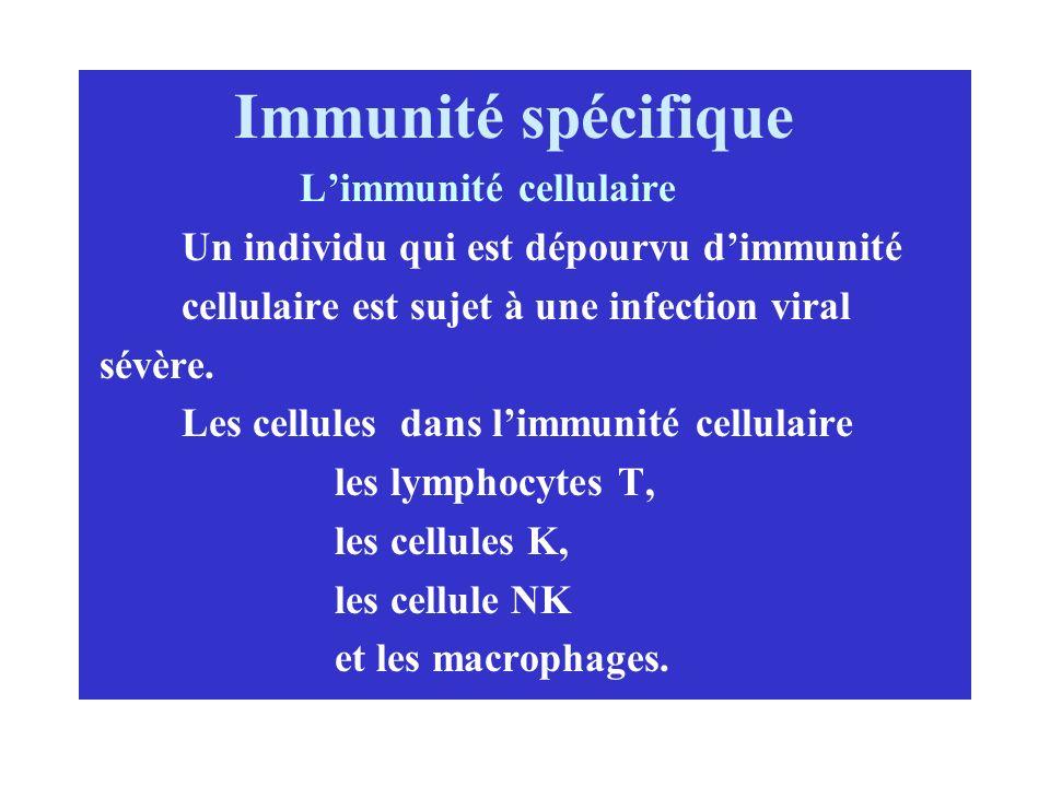 Immunité spécifique Limmunité cellulaire Un individu qui est dépourvu dimmunité cellulaire est sujet à une infection viral sévère. Les cellules dans l