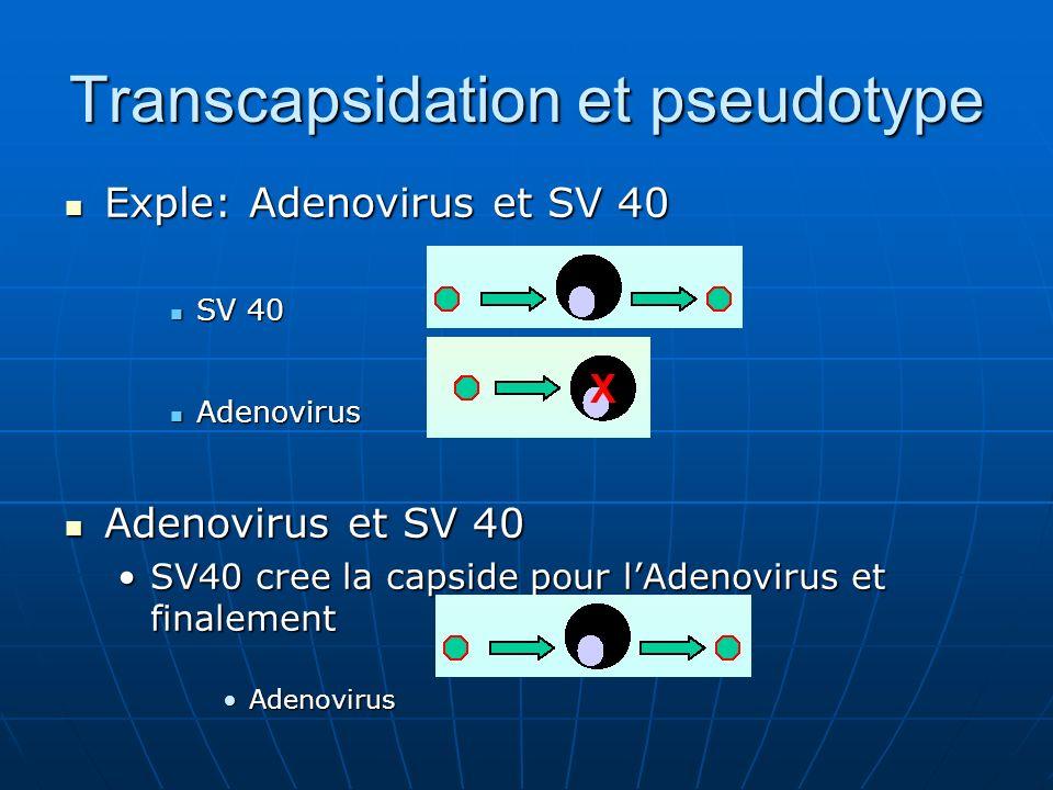 Transcapsidation et pseudotype Exple: Adenovirus et SV 40 Exple: Adenovirus et SV 40 SV 40 SV 40 Adenovirus Adenovirus Adenovirus et SV 40 Adenovirus