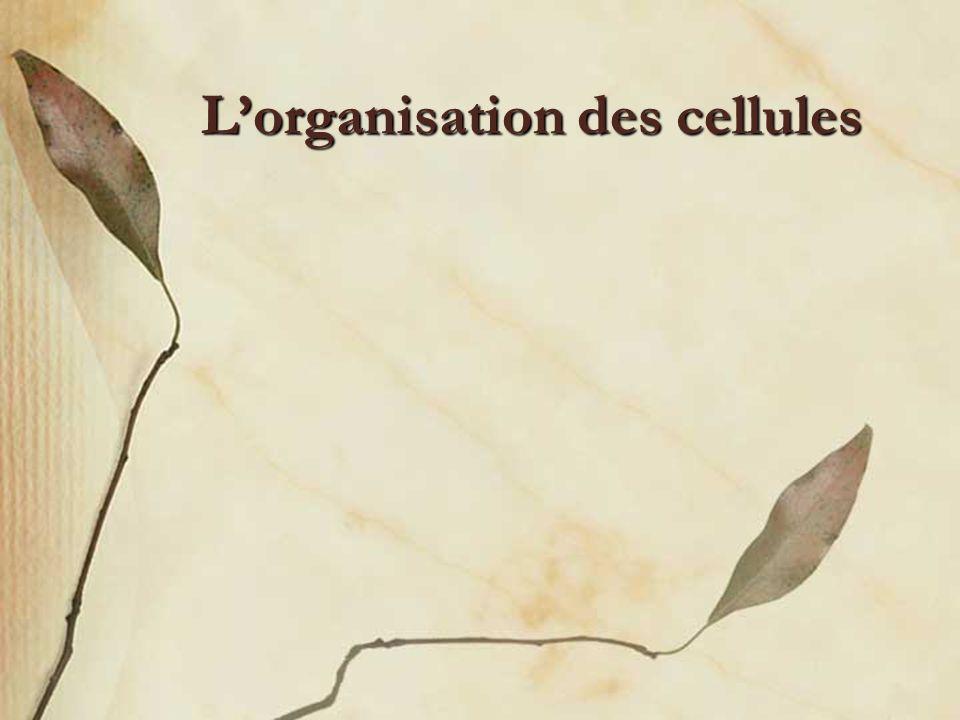 Lorganisation des cellules