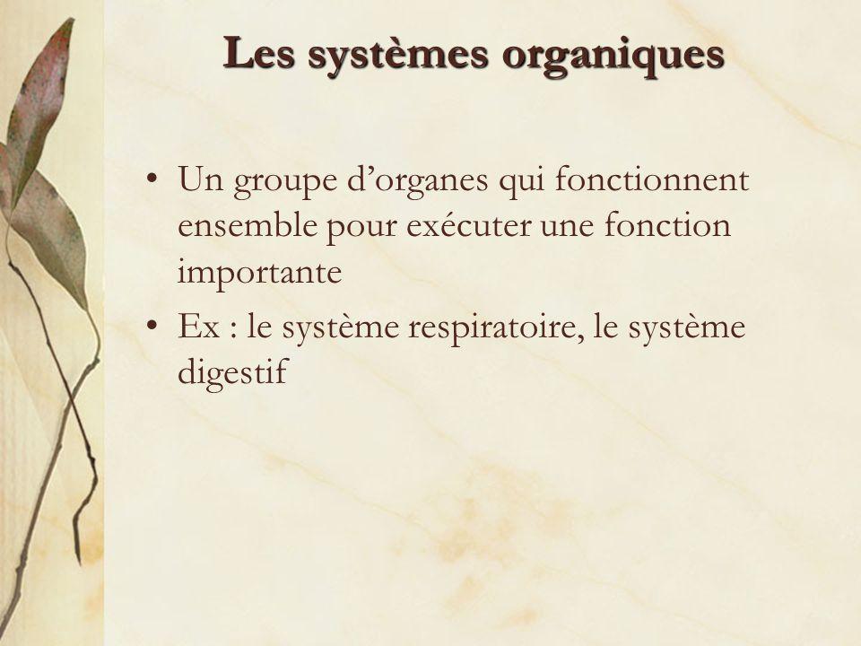 Les systèmes organiques Un groupe dorganes qui fonctionnent ensemble pour exécuter une fonction importante Ex : le système respiratoire, le système di