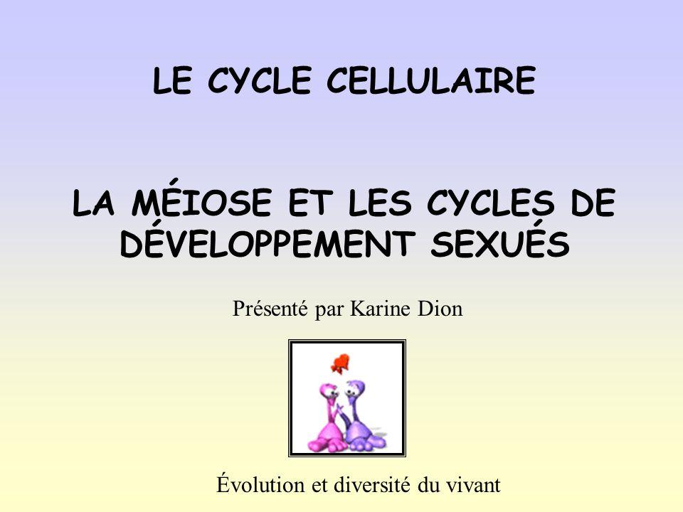 LE CYCLE CELLULAIRE LA MÉIOSE ET LES CYCLES DE DÉVELOPPEMENT SEXUÉS Présenté par Karine Dion Évolution et diversité du vivant