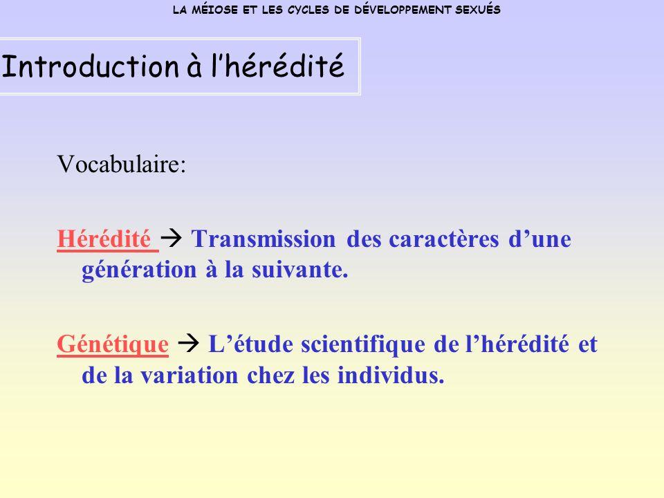 Vocabulaire: Hérédité Transmission des caractères dune génération à la suivante.
