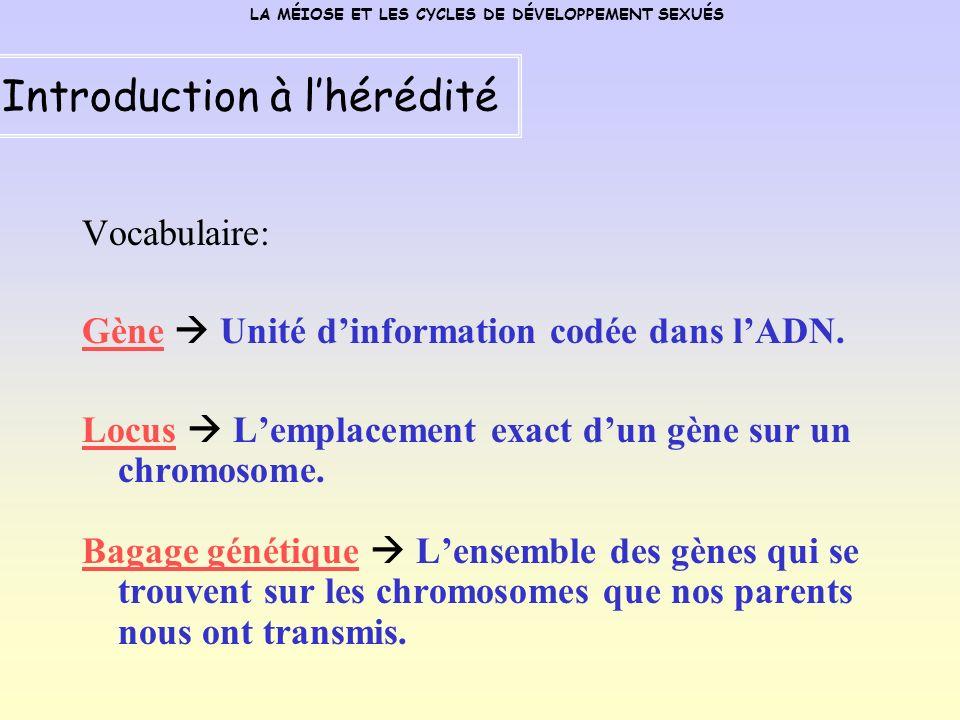 Vocabulaire: Gène Unité dinformation codée dans lADN.