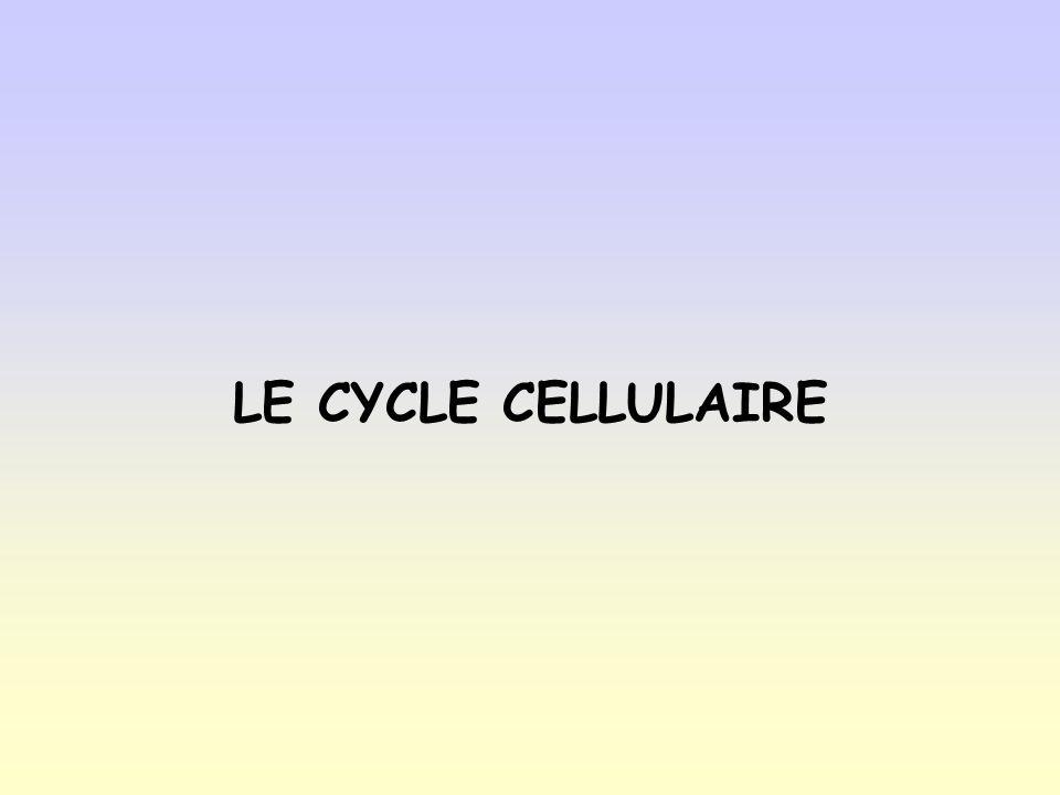 Méiose I – Télophase I et cytocinèse LA MÉIOSE ET LES CYCLES DE DÉVELOPPEMENT SEXUÉS Le rôle de la méiose dans la reproduction sexuée