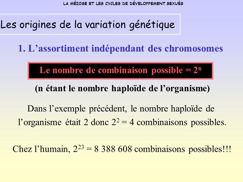 1. Lassortiment indépendant des chromosomes Le nombre de combinaison possible = 2 n LA MÉIOSE ET LES CYCLES DE DÉVELOPPEMENT SEXUÉS Les origines de la
