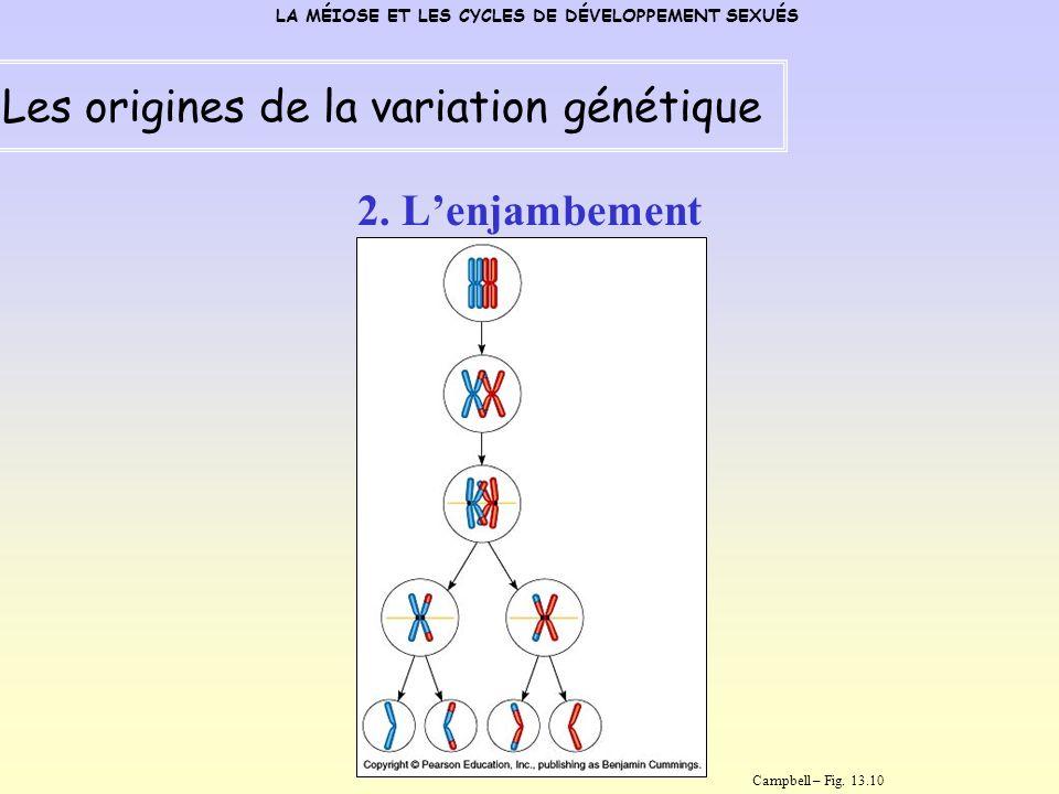 2. Lenjambement LA MÉIOSE ET LES CYCLES DE DÉVELOPPEMENT SEXUÉS Les origines de la variation génétique Campbell – Fig. 13.10