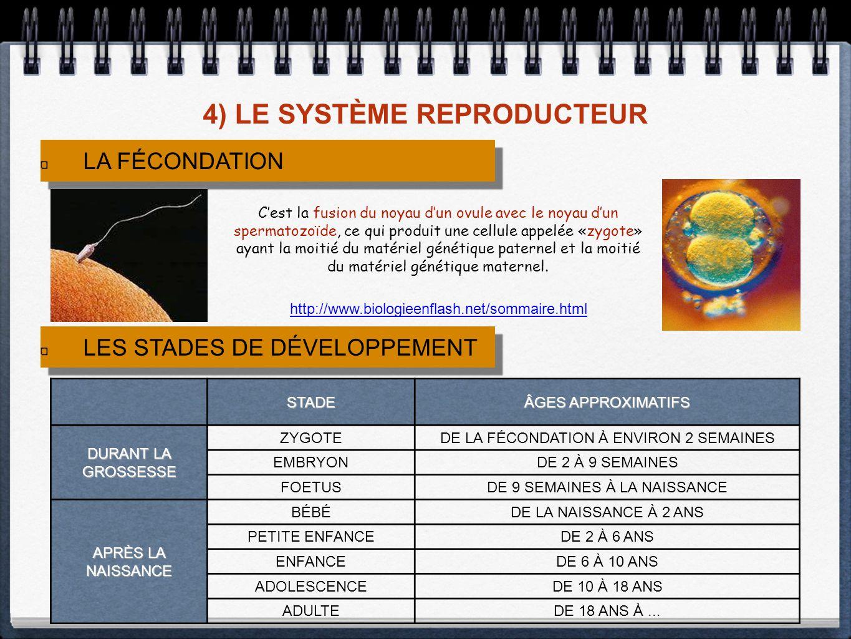 4) LE SYSTÈME REPRODUCTEUR http://www.biologieenflash.net/sommaire.html LA FÉCONDATION Cest la fusion du noyau dun ovule avec le noyau dun spermatozoïde, ce qui produit une cellule appelée «zygote» ayant la moitié du matériel génétique paternel et la moitié du matériel génétique maternel.